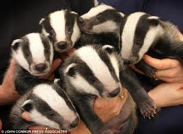 Six Badgers in the hand, but they have no wands
